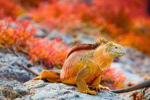 Fauna silvestre Galápagos Ecuador