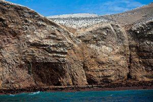 Fauna silvestre de las Islas Ballestas. Aves guaneras