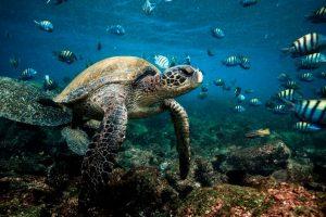 Tortuga marina de Galapagos